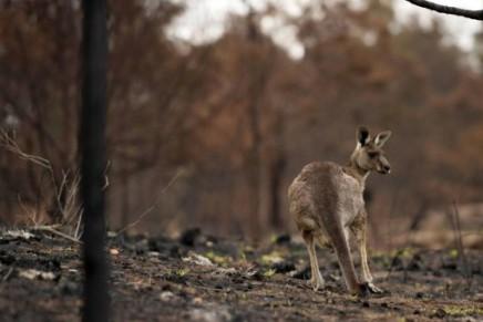 NPA: Καπιταλιστικές μεγα-πυρκαγιές